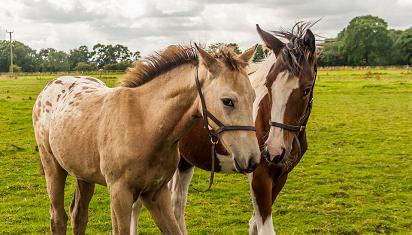 Kau bisa menuntun kudamu ke air, tapi tak bisa memaksanya minum. (Dok. Istimewa)